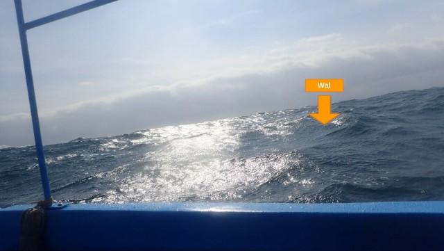 Gastbeitrag: Ein Wal für 2 Sekunden...